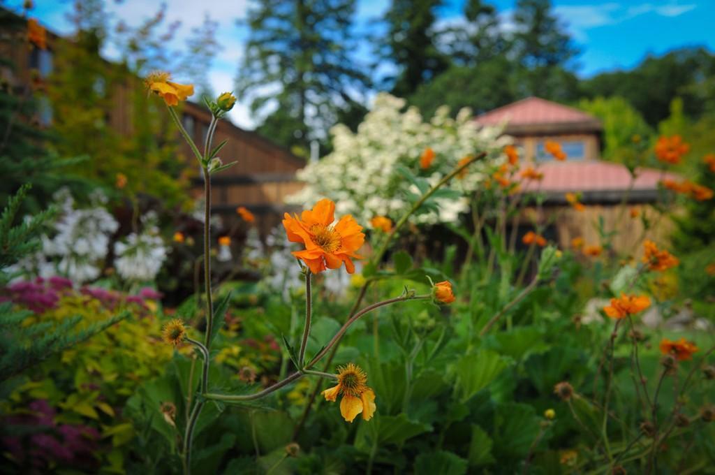 Dobbes Family Estate Oregon Wildflowers